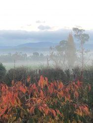 Deloraine Mist Image, North West Tasmania